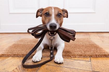 cachorro-condominio-regras-sindico-softcore2